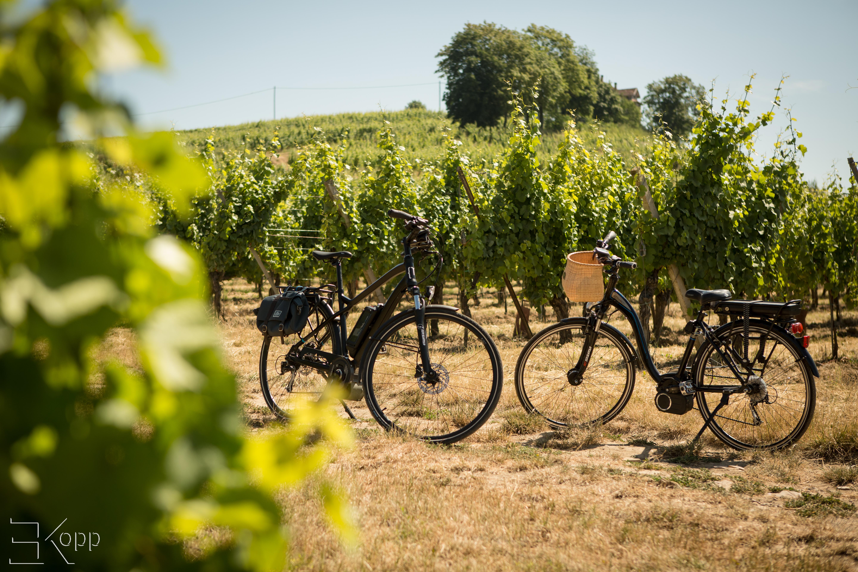Alsace + vélo = super combo.