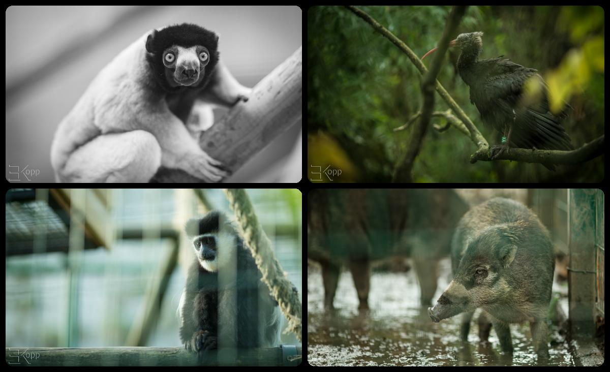 animaux 3
