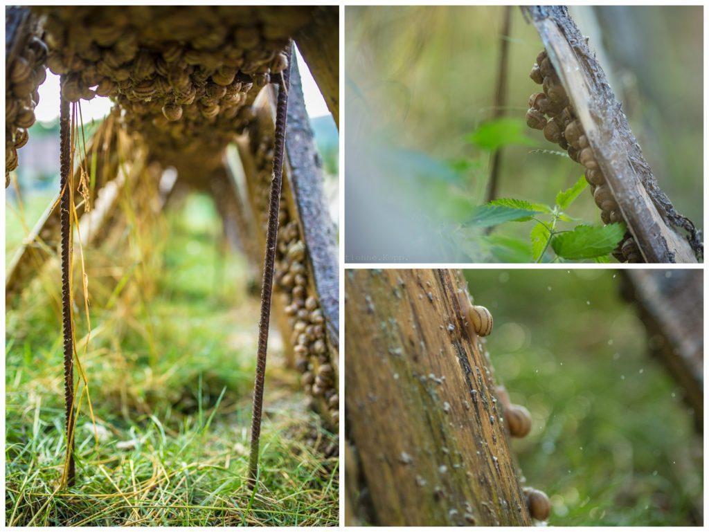 bois escargot