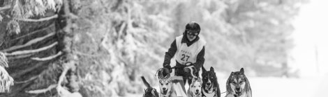 Le Championnat de France de Chiens de Traineau - Lac Blanc  (Janvier / Mars)