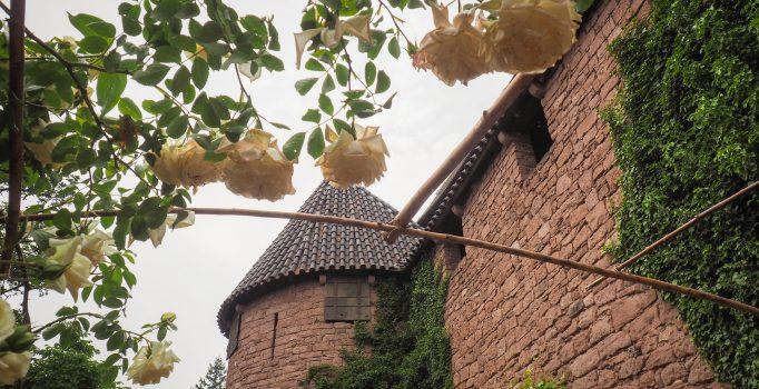Evénement : Délicieux jardin au Haut-Koenigsbourg